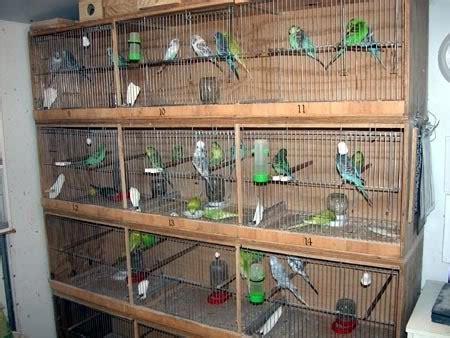Tempat Kulakan Pakan Burung Di Jogja birds palace