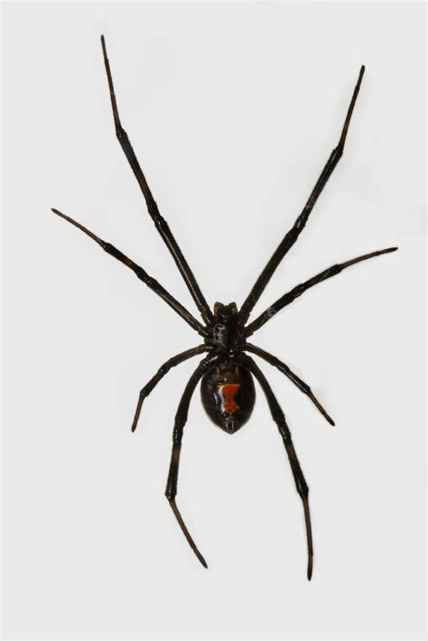 calgary spider pest control amp exterminator services
