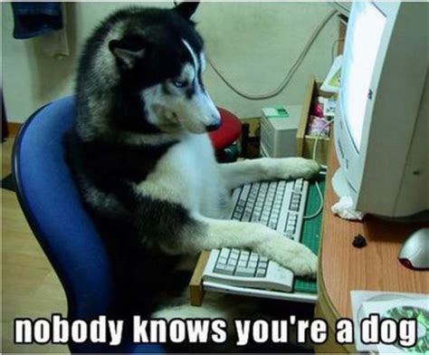 Internet Dog Meme - top 5 best dog memes on the internet