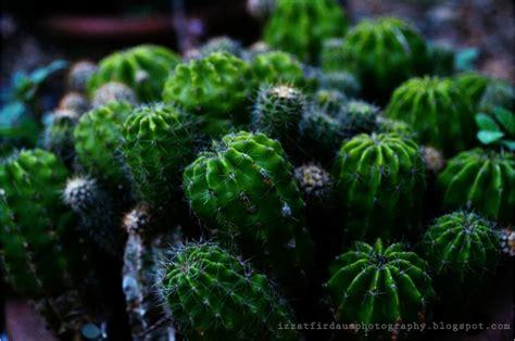 laman syurga firdaus bunga kaktus