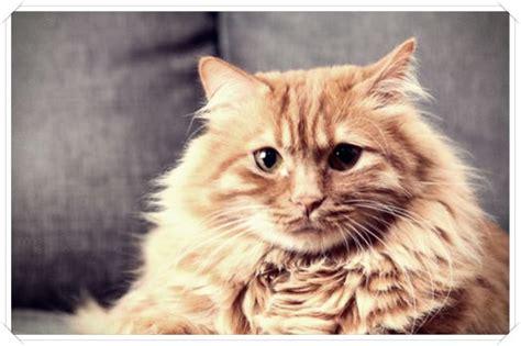 imagenes que se mueven gatos imagenes de gatos que se mueven dibujo imagenes