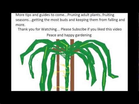 what time of year do you plant fruit trees how to grow a fruit tree 101