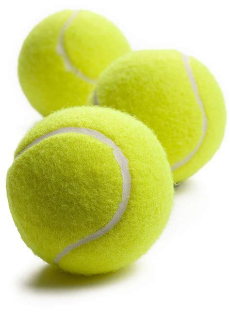dog trainer  dog case study aggression  tennis