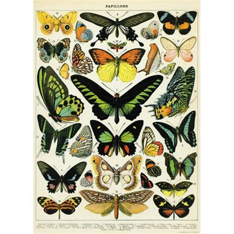Decoupage Posters - 20 215 28 history butterflies decorative decoupage