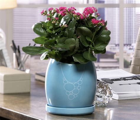 indoor ceramic planters blue martini indoor ceramic planter contemporary indoor pots planters dc metro by