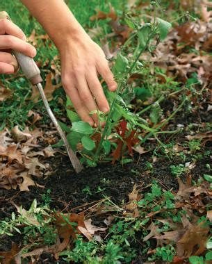 Gettin Ready For Weeds Season 3 by Six Tips For Effective Finegardening