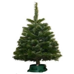 32 model lowes fresh cut christmas trees wallpaper cool hd