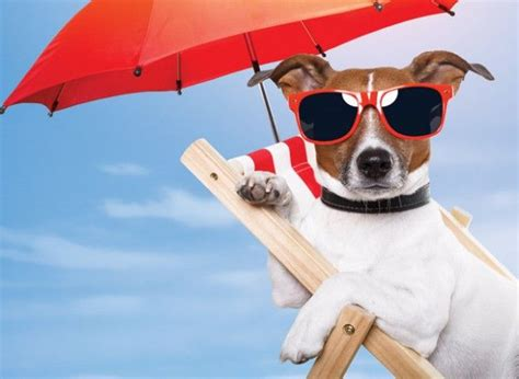 can dogs get sunburn 55 best images about pet protection tips on pets safety tips and