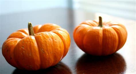 pumpkin of professional multi use mini pumpkins