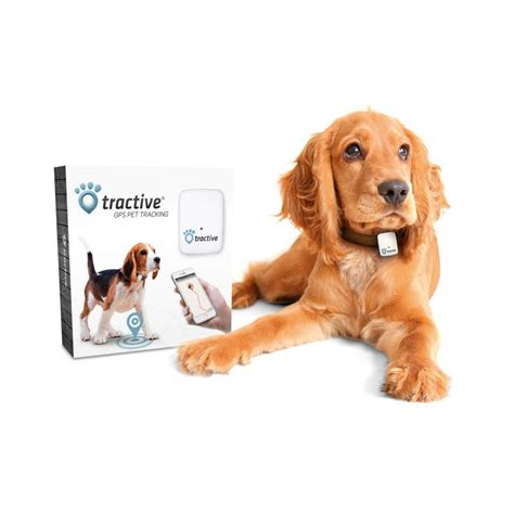 gps for dogs 6 of the best gps trackers reviews pet for cat parents
