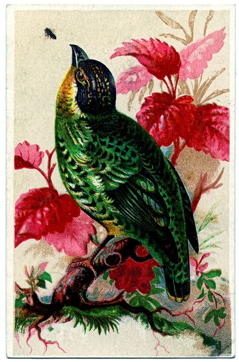 vintage trade card brightly colored bird  graphics fairy