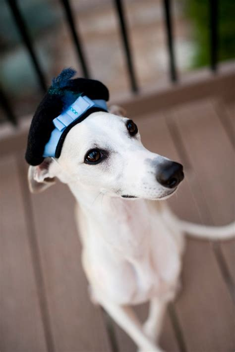Wedding Accessories For Dogs by 20 Dapper Wedding Accessories For Your
