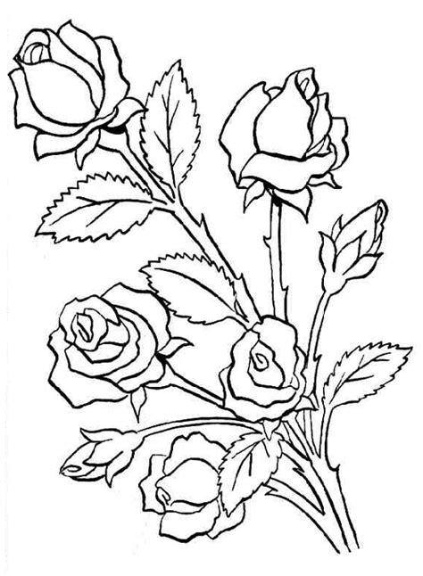 imagenes perronas de rosas im 225 genes de rosas perronas imagui