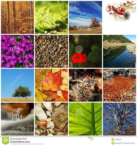 imagenes de naturaleza varias collage de la naturaleza imagen de archivo imagen 17226731