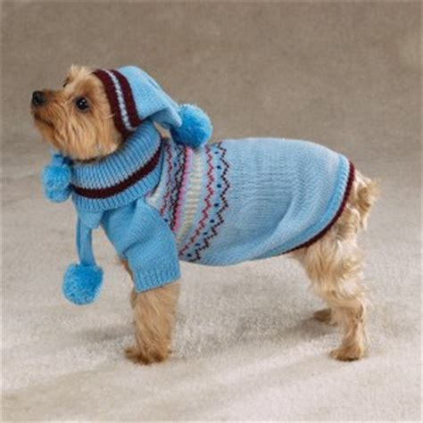 dogs in sweaters dgp does fashion week dgp for pets