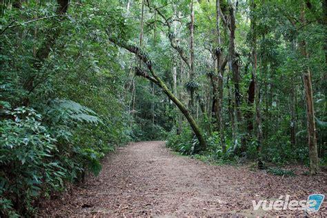 por una gentil floresta la magia de los bosques encantados vu 233 lese com