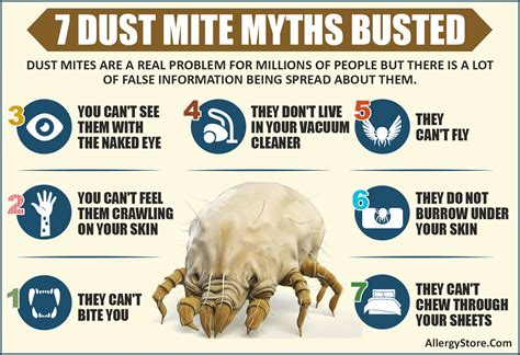 dust mites in pillows weight dust mite information the enemy