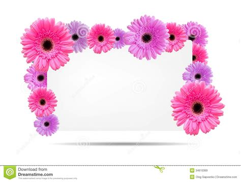 card template for flowers gerbera flowers with white card template stock image