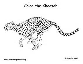 cheetah coloring pages cheetah coloring page