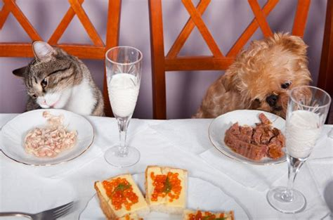 what happens to a who eats table scraps dos and don ts of feeding your pet table scraps pet care facts