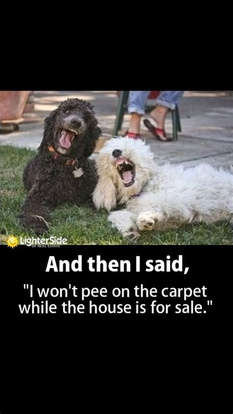 puppy realty lies that dogs tell real estate toronto