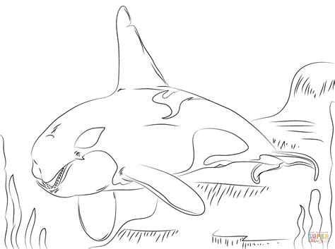 beautiful killer whale coloring page free printable
