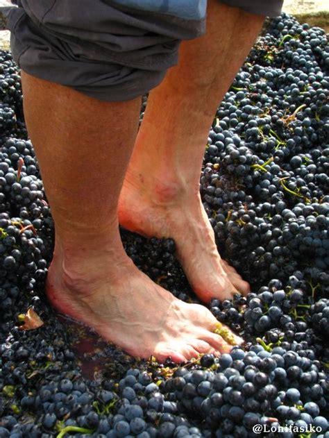 imagenes de como hacer uvas vendimia y pisado de uva en rioja alavesa enoturismo en