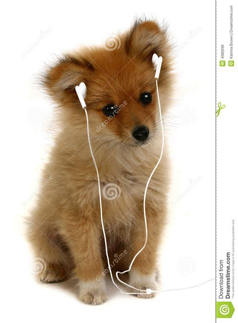 puppy to adorable puppy listening to royalty free stock photos image 4082698