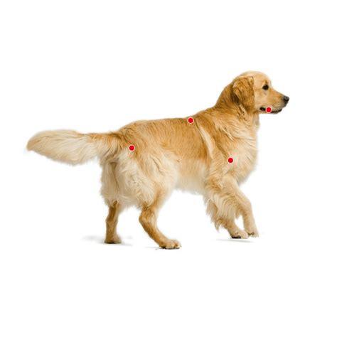 royal canin golden retriever 25 royal canin golden retriever 25 pienso barato