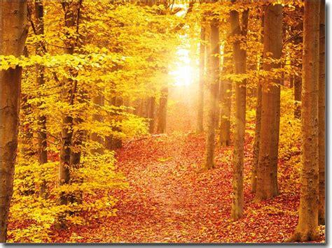 Sichtschutzfolie Fenster Wald by Glasfoto Glasdeko Mit Herbstwind Fenster Fotofolie