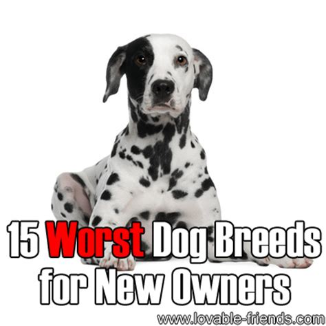 worst dogs for 15 worst breeds for new owners lovable friends