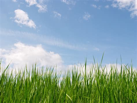 powerpoint templates free download grass green grass and blue sky for powerpoint templates ppt