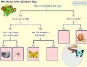Tree Bed Frame Science Key Stage 2 Habitats