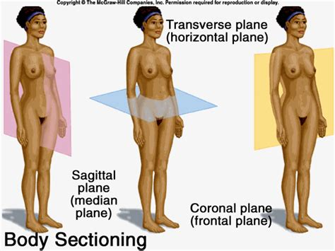 sections of body body planes in anatomy notes for pakistan