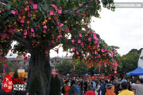 new year wishing tree tradition hong kong new year celebrations 2015