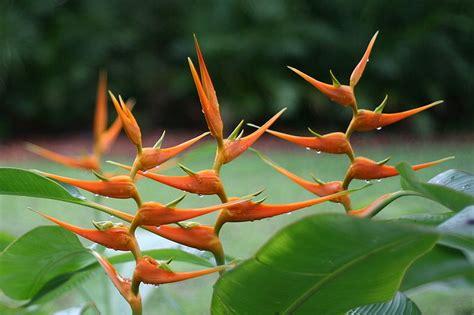 amazon plants rainforest plants