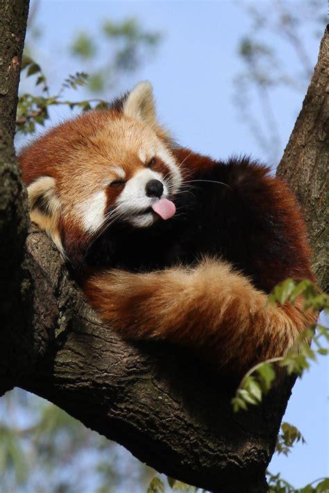 read panda panda for daniel on pandas