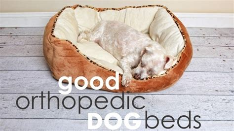 For Big Dogs - best orthopedic beds for large dogs herepup