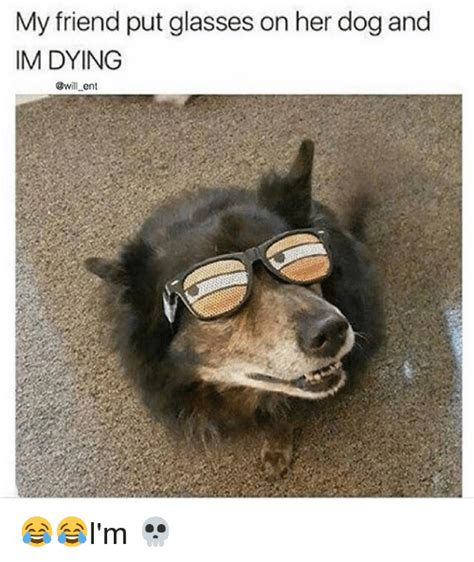Dog With Glasses Meme - my friend put glasses on her dog and im dying ent i m