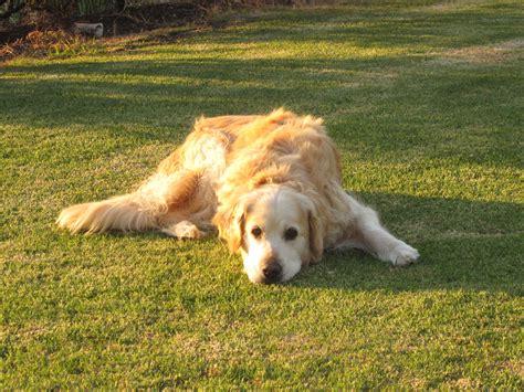 can dogs kiwi what can you do 171 backyard kiwi