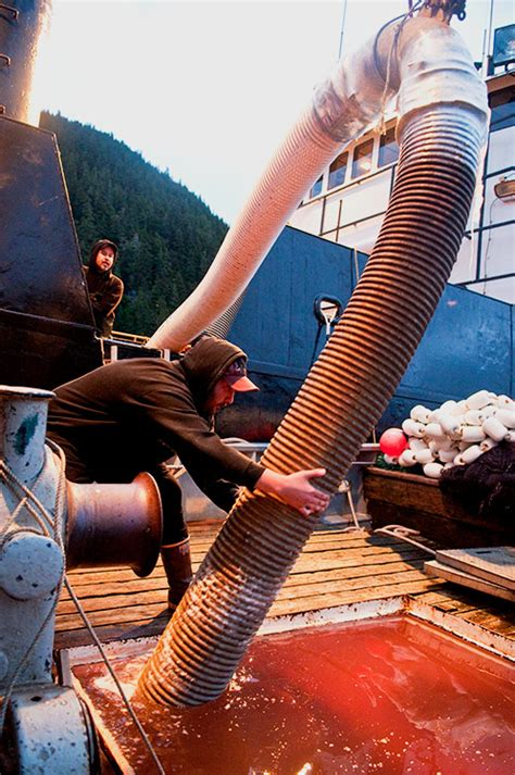 work on a fishing boat alaska what it s like to work on a commercial fishing boat in alaska