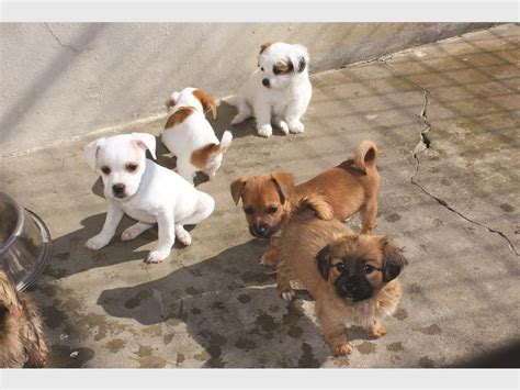 aspca dogs for adoption adopt a pet at the spca these pups are eager to find a family newcastle advertiser