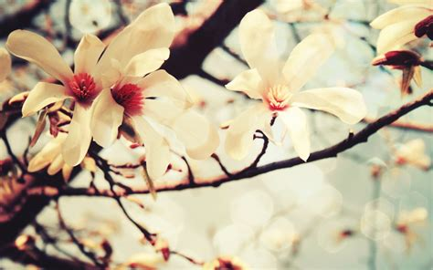 imagenes de flores wallpaper papel de parede flores de primavera wallpaper para
