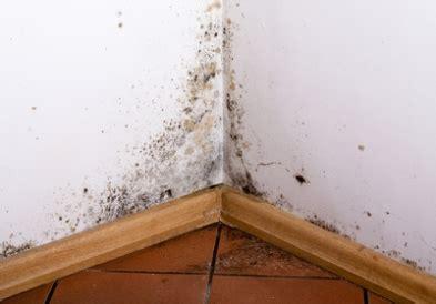 comment enlever de l humidité sur un mur 4231 aureobasidium in your home