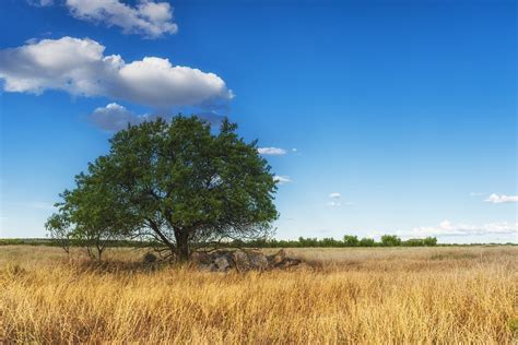 Landscape Pictures Of Trees Free Photo Tree Landscape Nature Leaves Free Image