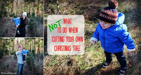what not to do when cutting your own christmas tree the