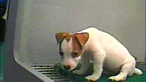 pet stores in ohio that sell puppies pet linked to puppy mills cbs news
