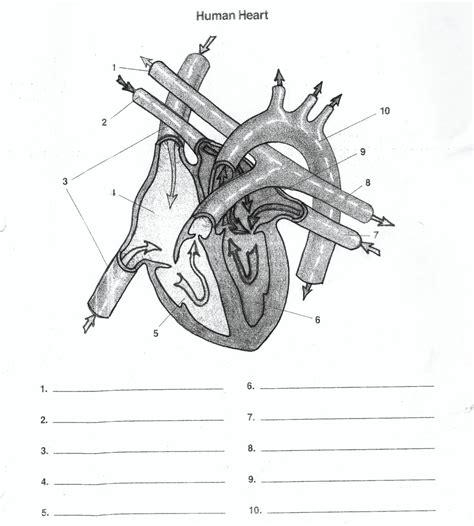 blank heart diagram worksheet human anatomy diagram clipartsco