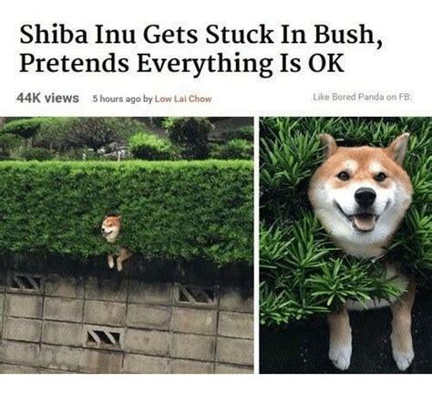 Shiba Meme - 25 best memes about shiba inu shiba inu memes