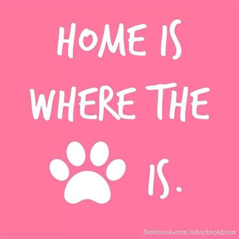 house a puppy in 5 days home is where the paw is wryley pets the